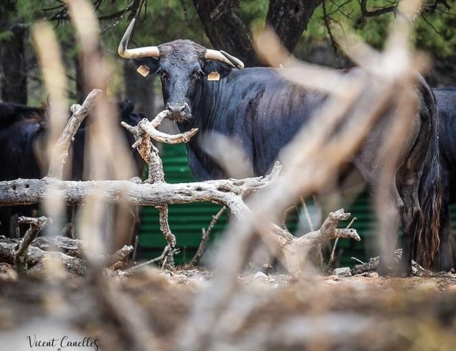 Más de 118.000 euros para las ganaderías de Castellón