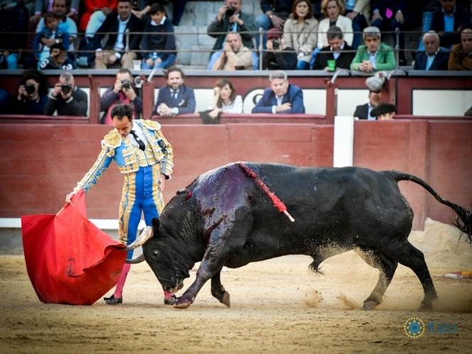 'Carasucia', un toro bravo